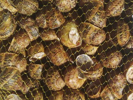 Granjacol - Caracoles grandes